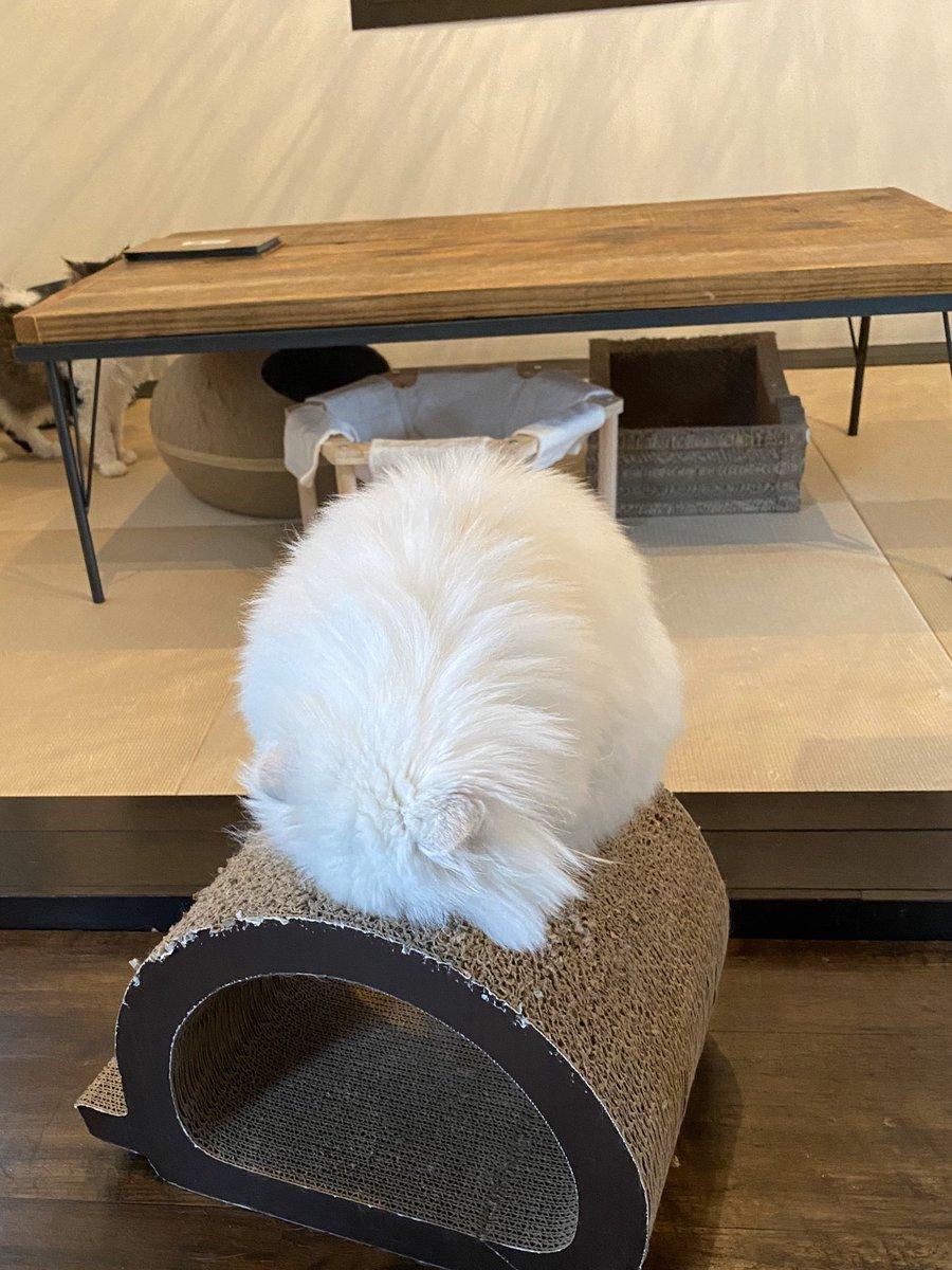 えっ、待って。丸だと思ってたのに上から見たら四角だし!!!(※猫です)