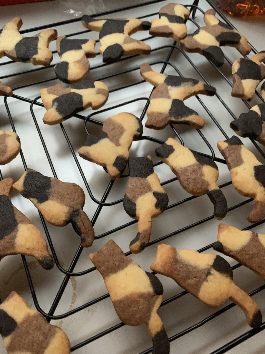 フォロワー! 三毛猫ちゃんクッキーだよ!🐈