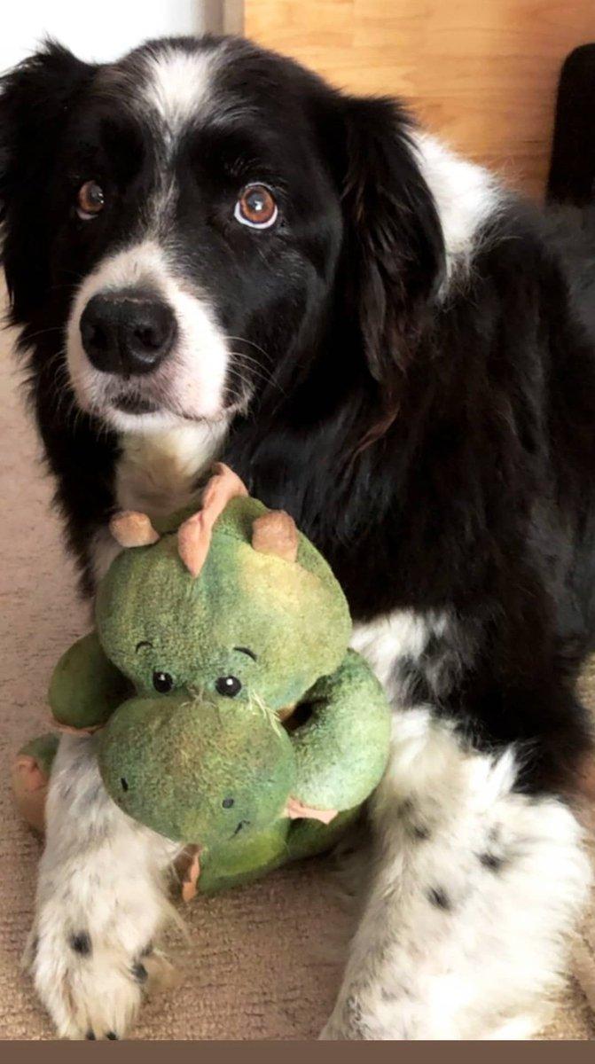 #ilovemydog Mr Baxter xx pic.twitter.com/M1oRHoQnTO