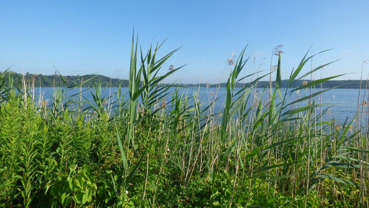 Blick über den Ziegelaußensee in Schwerin #schwerin #ziegelsee #mecklenburgvorpommern #mvtutgut #landzumleben #aufnachmv #unsernorden #mvistwow #natur #nature #naturephotography #naturfotografie #landschaft #landscape #landschaftsfotografie #landscapephotography #sommerpic.twitter.com/TecAhczZM1