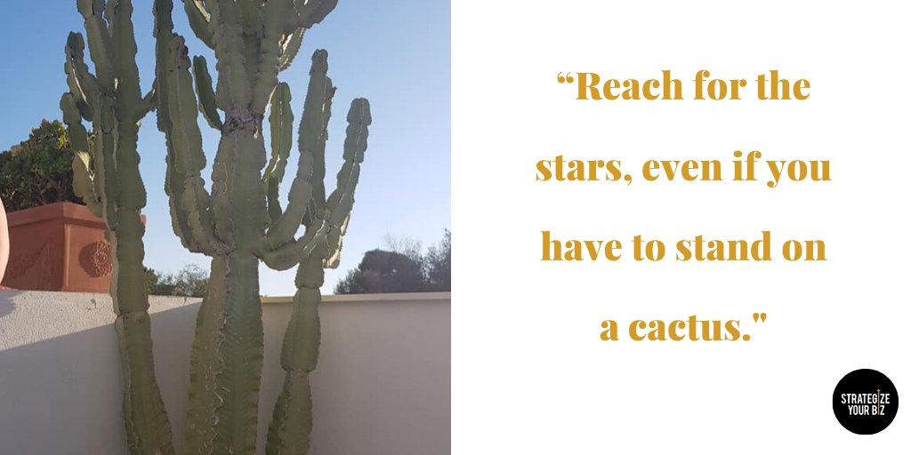 """""""Reach for the stars, even if you have to stand on a cactus."""" Susan Longacre #nopainnogain #reachforthestars pic.twitter.com/fmXpl28v9z"""