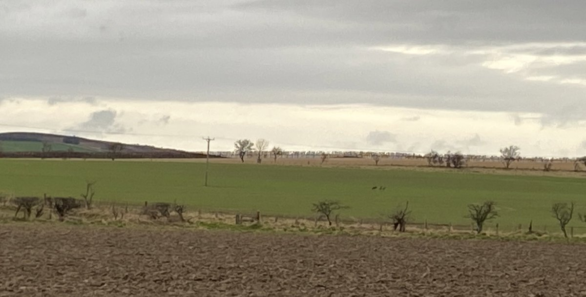Deer in the fields across from West Lyham #Northumberland <br>http://pic.twitter.com/mhNQCdh9tZ