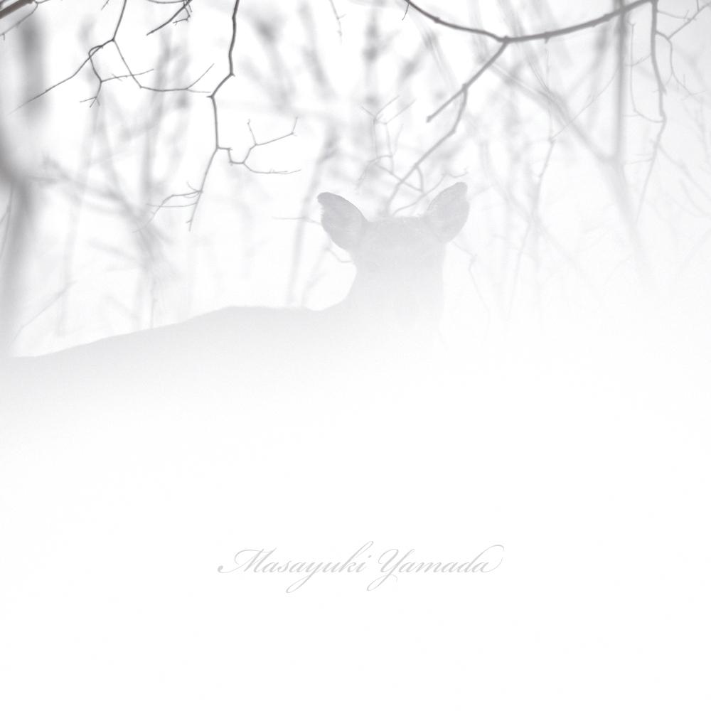 She blends into the snow. #Deer   #エゾシカ #北海道  #Hokkaido  #wildlife  #wildlifephotography  #snowpic.twitter.com/FdDq60vD0K