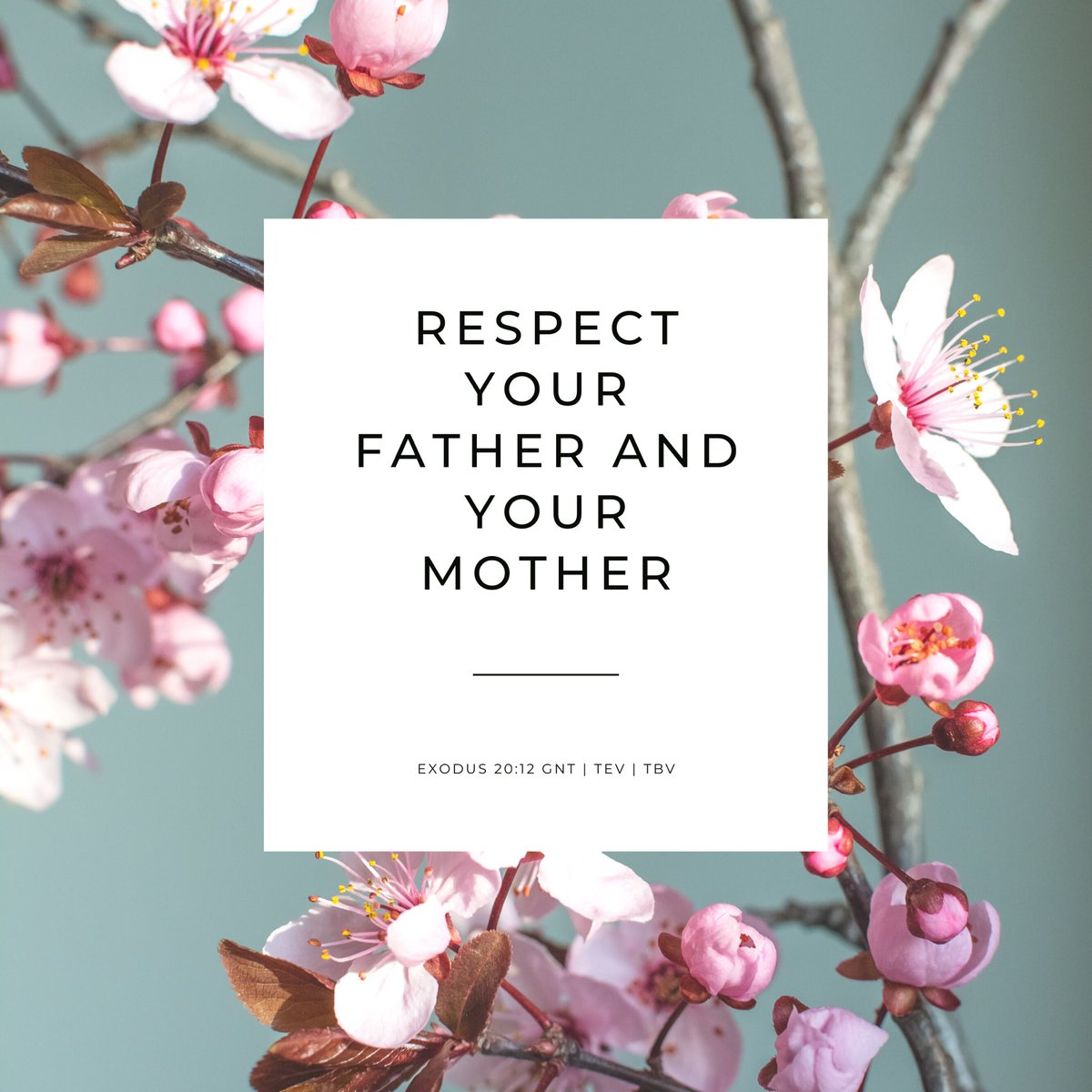 Exodus 20:12 TEV (The Ten Commandments) Respect your father and your mother, so that you may live a long time in the land that I am giving you. #sharing #faith #Monday #Bible #Gospel #Scripture #Exodus #ReadTheBible #ReadYourBible #BibleExposition #TheBibleVerses #tbv #TEV
