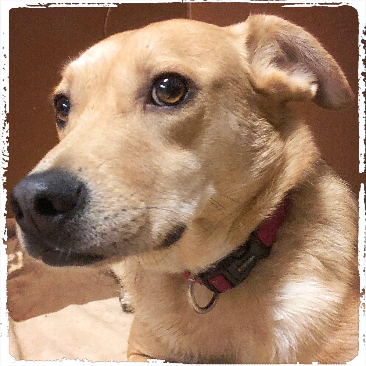 Trixi wishes you a nice day  . .  #doglover #ilovemydog #instadog  #meinhund #dogs_of_world #dogsearth #puppies #hund #hundeliebe #hundeleben #dogislove #trustrespectlove #hundeland #hundeliebe #hundeleben #hundeblog #fellnase #besterhund #dogsneeddogs #doggy #dogspic.twitter.com/6fL4CEjVI2