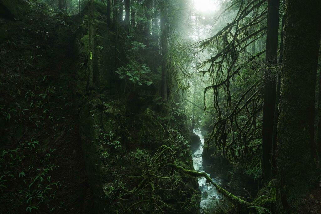 "https://ift.tt/2TYvnic  - Reddit's ""Earth Porn"" page - Walking along this stunning rainforest canyon of West Vancouver, BC is like stepping back in time. A decent amount of old trees in here escaped being logged as well [OC] [1920x1282] pic.twitter.com/OkaKneOf2a"