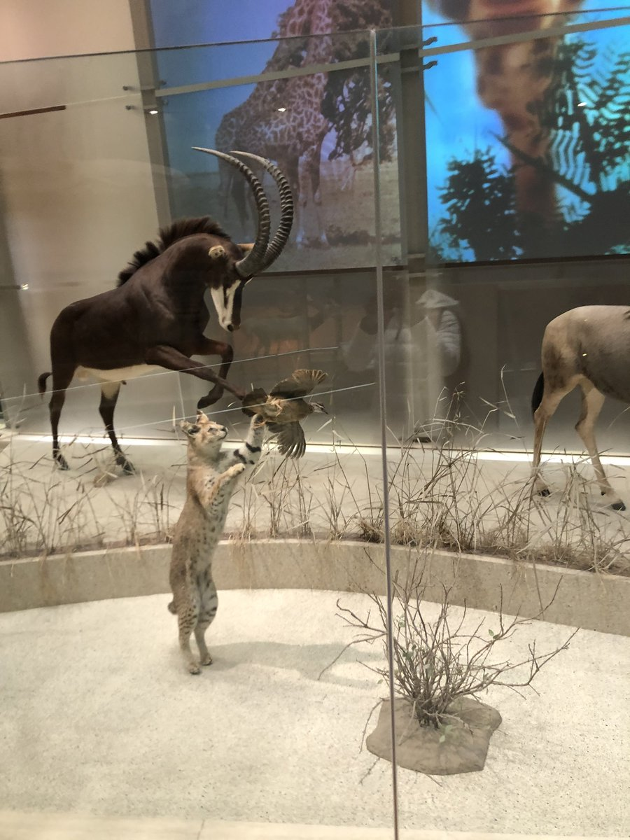 Last week we took a trip to the National museum of Natural History, which ties into our lesson on predator and prey. The students were able to see exhibits that portrayed scenes of predator and prey. <a target='_blank' href='https://t.co/jkn2I5cqS5'>https://t.co/jkn2I5cqS5</a>