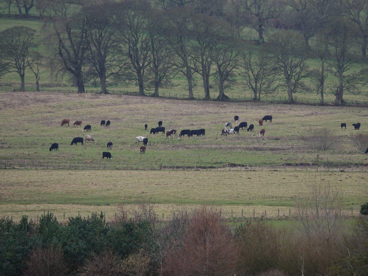 Spot the Common Crane.  Near Hartburn, Northumberland, yesterday <br>http://pic.twitter.com/6xVRxiU3c6