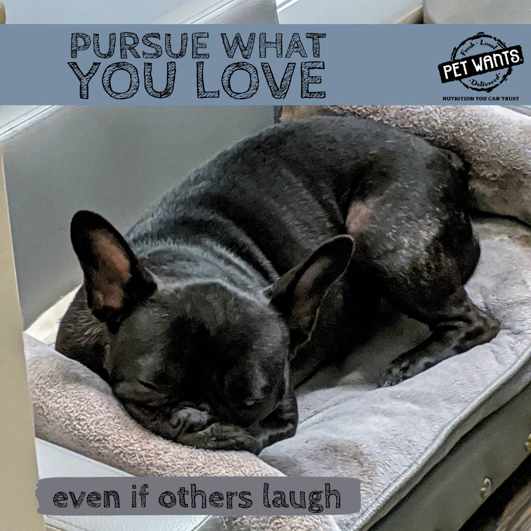 Pursue what you love! Audrey loves holding on to her couch pillow, and she doesn't care about the laughing it causes.  . #motivationmonday #audreyhepurn #petwantsmascot #weirdsleeper #healthypup = #happypup #luvpets #feedfresh #frenchiegram #frenchiesofinstagram #petwantsheightspic.twitter.com/qPJoy7AARo