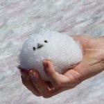 かわいいシマエナガを手中にw雪玉でできたシマエナガさん!
