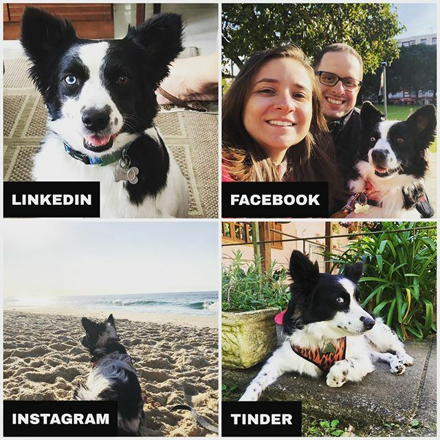 Minhas redes sociais!   My social networks! #lukeamb #bordercollie #viralata #srd #dog #pet #instadog #dogsofinstagram #dollyparton #dollypartonchallengedog #redessociais #likedin #facebook #instagram #tinder https://ift.tt/38IVZaZpic.twitter.com/lfyJoyyXek