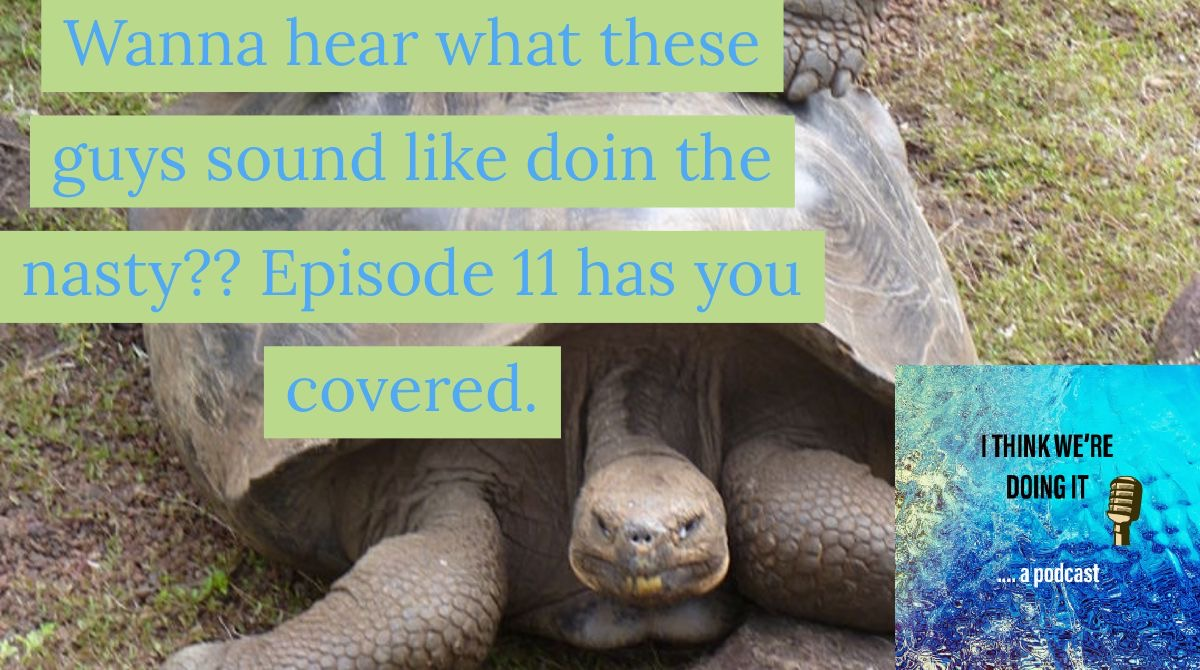 Tortoise sex? Yeah. That happens.  #podcasts #podcast #podcasting #podcaster #podcastlife #PodernFamily #googleplay #stitcher #itunes #spotify #funny #podcastlove #itunes #comedy #newpodcast #podcastjunkie #siblings #tortoisesexpic.twitter.com/velUx8bIVH