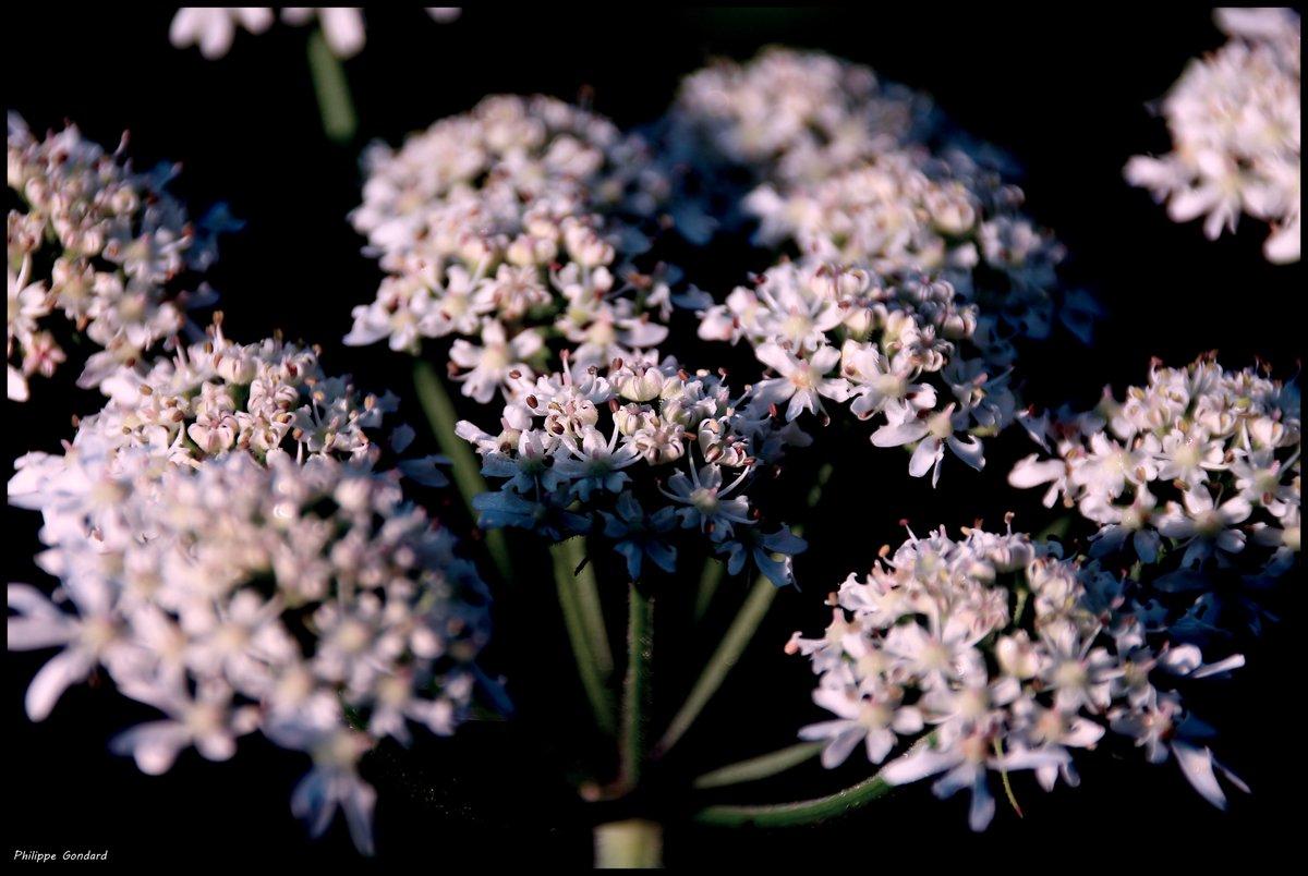 Ballon (Sarthe) #ballon #sarthe #lasarthe #sarthetourisme #labellesarthe #labelsarthe #maine #paysdelaloire #paysage #nature #campagne #rural #ruralité #gondard #route #road #OnTheRoadAgain #chemin #randonnée #graphique #zen #fleurs #flowerspic.twitter.com/hjDpx5GLmB