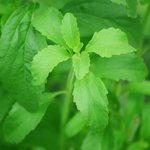 Image for the Tweet beginning: La Stevia, el oro de