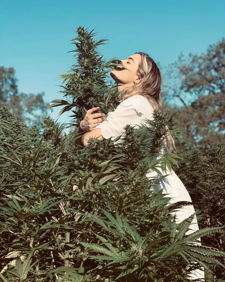 #cannabisculture #cannabisindustry #cannabis #cannabislegalepic.twitter.com/dveCVbMNPf