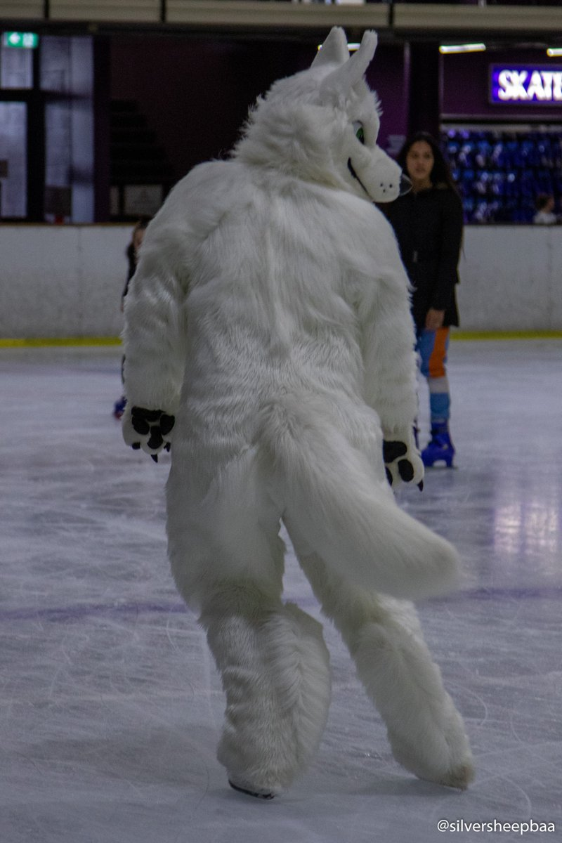 That snow wolf @Diegowuff has some moves on the ice. He was even showing Cookie how it's done.pic.twitter.com/yc3xeUX4uv
