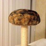 【クリボー?ネジ?】キャットタワーの上に丸まった猫の姿が謎の生物過ぎる