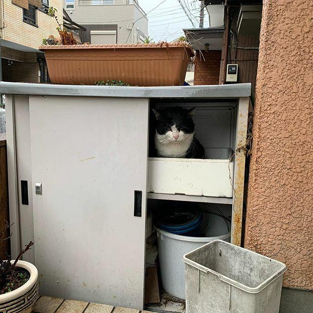 おはようイカスミ! Good Morning Ikasumi! 寒いからそこにいなね。 #うちの猫ら #猫 #ねこ #ikasumi #sotononekora #cat #ネコ #catstagram #ネコ部
