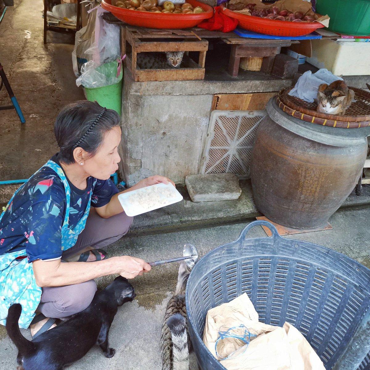 タイ人は動物をとても大切にします。 市場の八百屋の方が猫に餌を与えていました🐈 野良犬も野良猫も、可愛がられていますよ!  #スカーレット #株式会社スカーレット  #不動産相談 #不動産情報 #Thailand #Bangkok #タイ #バンコク #thai #猫 #野良猫 #cat #cats