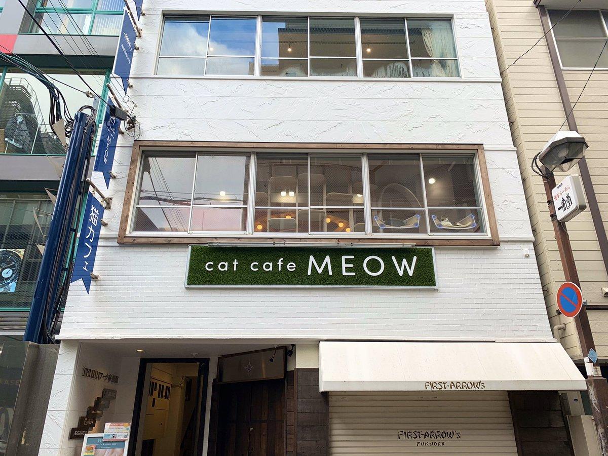 おはようございます🌂 cat cafe MEOWオープンしました!  今朝はおもちちゃんと大吉くんが窓ベッドIN🛌🐱💗 カメラ目線もくれました♫  本日も店内暖かくして皆様のご来店をお待ちしております!  #猫カフェmeow #catcafemeow #猫カフェ #猫 #cat #catcafe #고양이 #福岡 #天神 #大名 #fukuoka