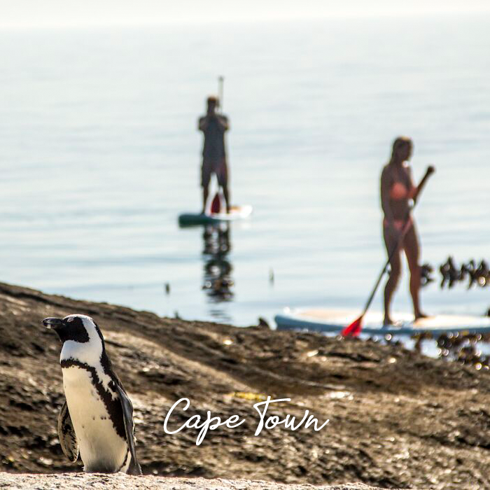 Learn to #StandUpPaddle with an ever-changing array of seals and penguins at play in the calm waters of Simon's Town Quays in Cape Town, South Africa.Let us help plan your next #UnusualBucketList adventure - http://ow.ly/QgWh50y5q7r#Travel #Explore #TimelessAfricaSafaris