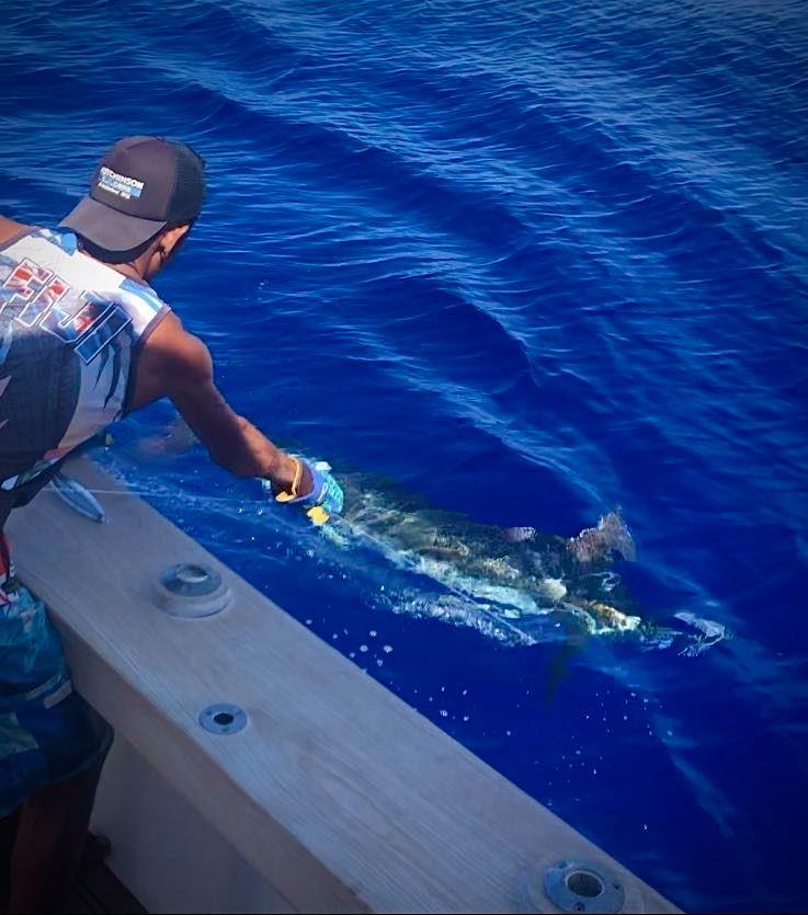 Havannah, Vanuatu - Capt. Russ Housby on Nambas went 1-1 on Blue Marlin.