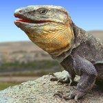 Image for the Tweet beginning: Desaparecen los lagartos canarios y