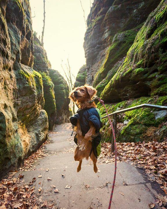 Beam me up, Scotty!•••••#dogsofinstagram #puffdoggy #humangradegearfordogs #saechsischeschweiz #saxonynationalpark #germany #hikingwithdogs #dogsintheoutdoors #outdoorswithdogs #greatoutdoors #greatoutdogs #explore #travel #photography #doglovers