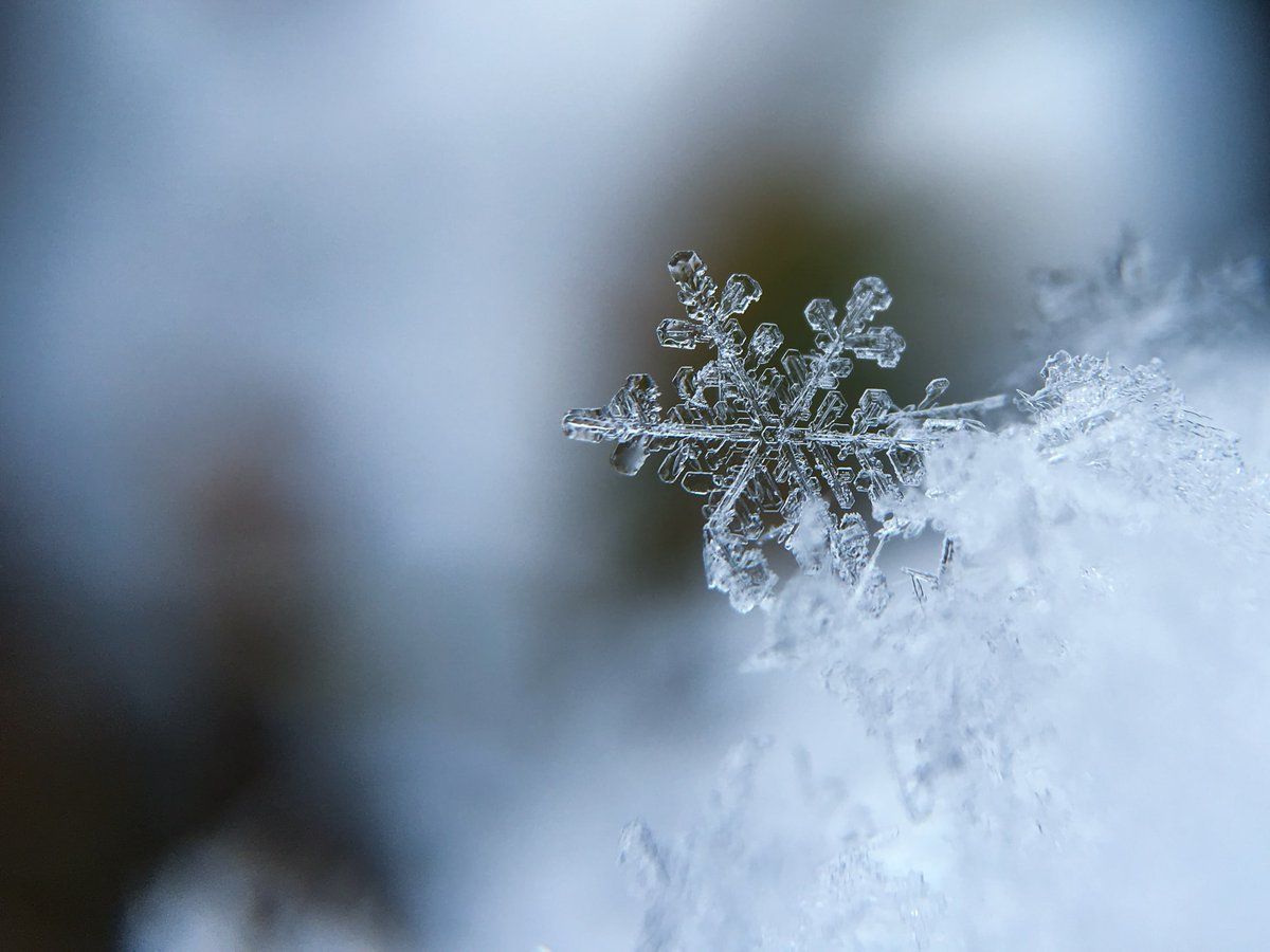 Easy Winter science lessons for kids! With a FREE download.  Credit: Unsplash #sciencetwitter #winter