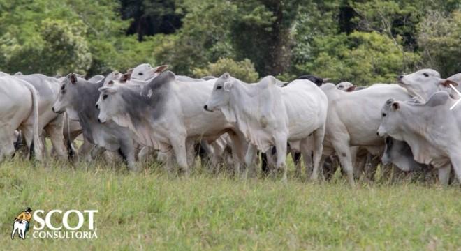 Pressão de baixa perde força no mercado do boi https://bit.ly/2O4RLTe  #pecuária #pecuáriadecorte #carnebovina #bovinoculturapic.twitter.com/sjAbWUOW8r