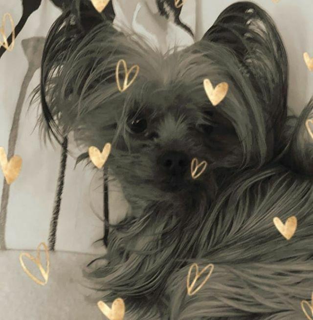 Sie macht schon wieder Fotos... Kann man nie in Ruhe schlafen  . . . #miro #love #schlafen #ruhe #herzaufvierpfoten #yorkie #yorkshire #yorkshire_terrier #petstagram #hund #dog #dogstagram #dogoftheday #yorkshireterrier #dogsofinstagram #yorkiesofin… https://ift.tt/2uARPmWpic.twitter.com/hQhcsZz7qA