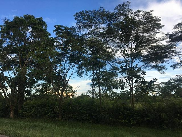 No. 48 - Atardecer en Acacías (Meta) - Las mejores 60 del 2019 - #sinfiltros  #winner  #colombia  #colombianatural  #natural  #naturaleza  #vida  #arbol  #nature  #sky  #summer  #beautiful  #pretty  #blue  #tree  #beauty  #light  #photooftheday  #love  #green  #skylovers  #day  #iphonesia  #mothernatur