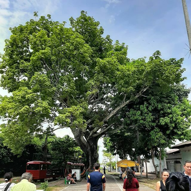 No. 46 - Girardot (Cund) - Las mejores 60 del 2019 - #sinfiltros  #winner  #colombia  #colombianatural  #natural  #naturaleza  #vida  #arbol  #nature  #sky  #summer  #beautiful  #pretty  #blue  #tree  #beauty  #light  #photooftheday  #love  #green  #skylovers  #day  #iphonesia  #mothernatur