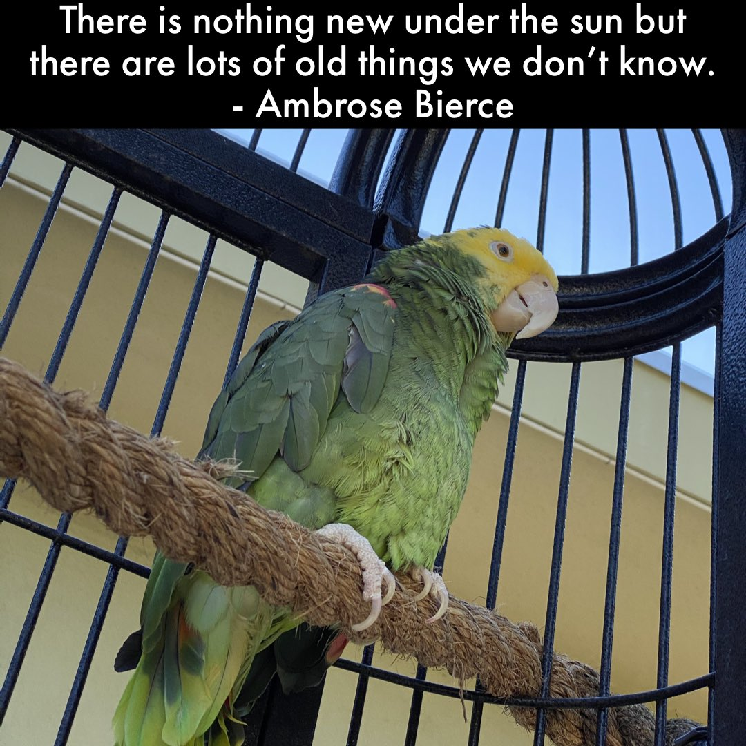 Marley   #cockatoo #parrot #bird #parrot #quotesaboutlife #quotes #quotestoliveby pic.twitter.com/9HqlYeZt2i