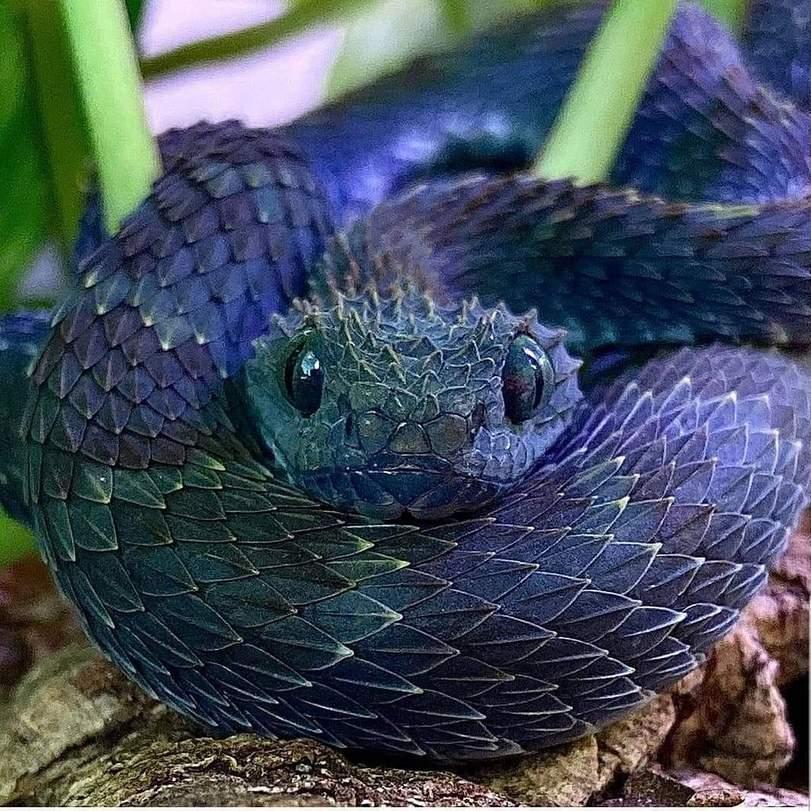 самые красивые змея в мире уровень