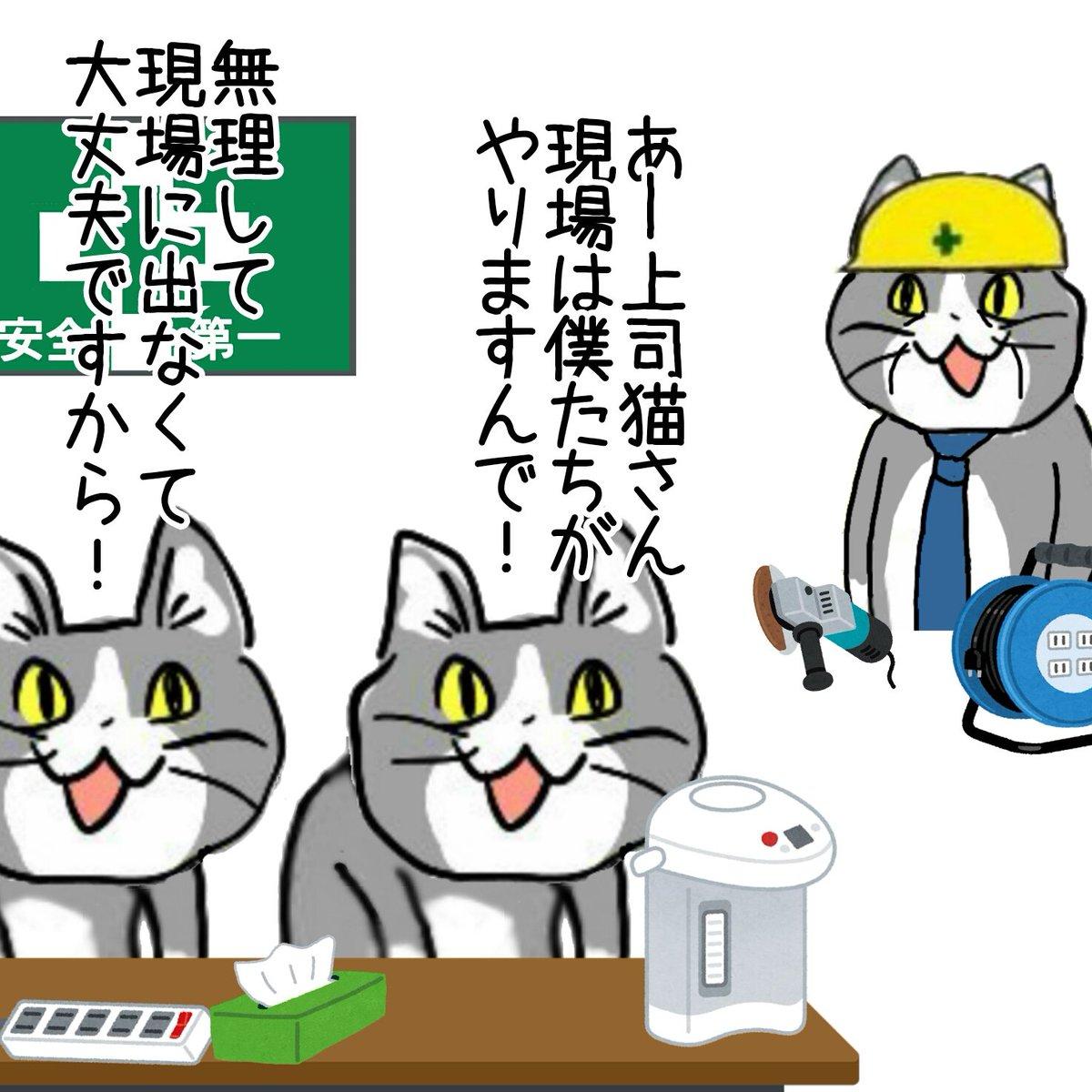現場 猫 画像 現場ネコさん、カオス【画像詰め合わせ】 - なんJ