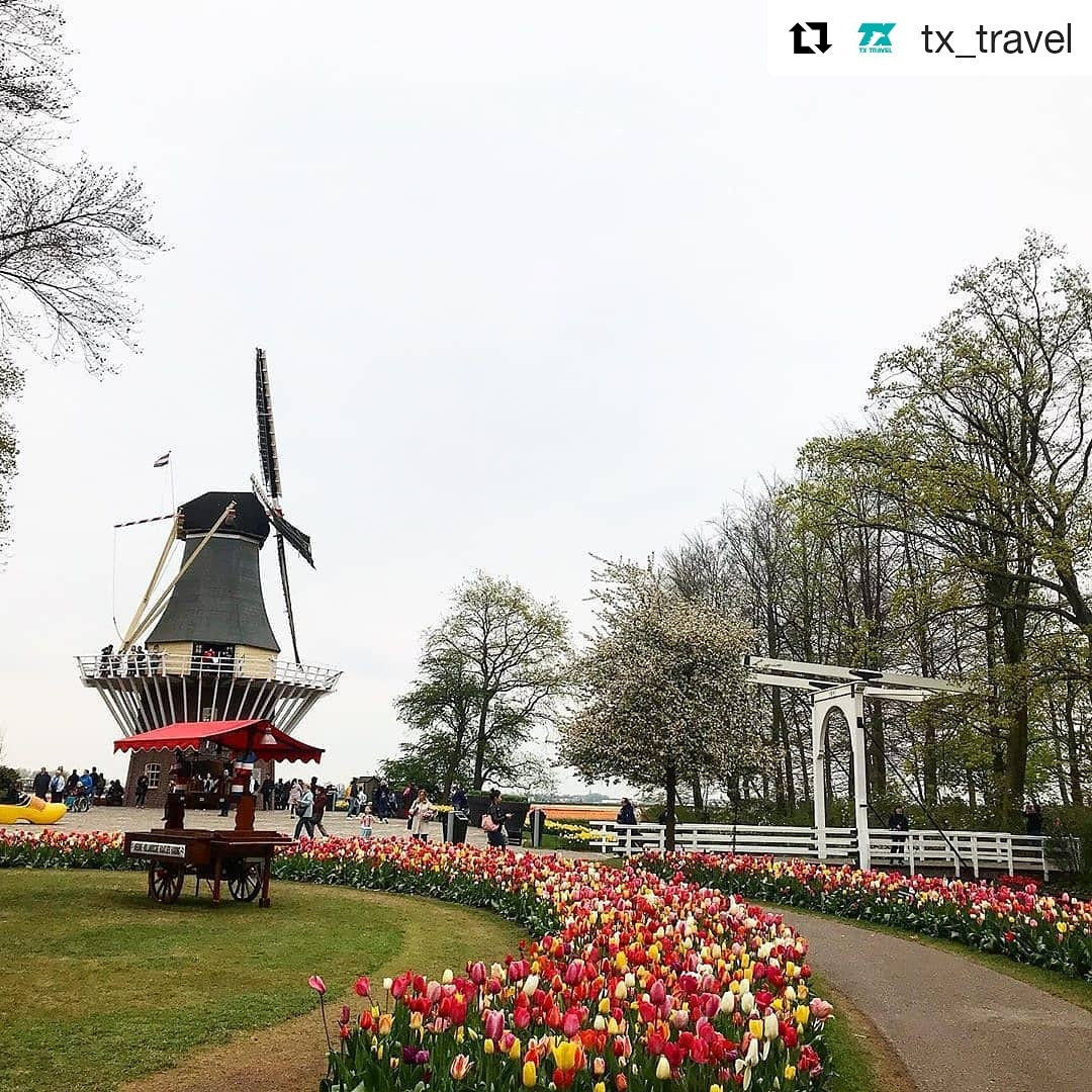 #Repost @tx_travel (@get_repost) ・・・ . Goedendag! Di Belanda terdapat taman bunga tulip yg sangat terkenal lho guys bernama Taman Keukenhof, luasnya 80 hektar menjadikannya taman terbesar di Eropa lho! waahh keren kan! taman ini biasanya dibuka bulan Maret hingga Mei pic.twitter.com/5p7yvbAKBr