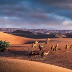 Image for the Tweet beginning: Creating dramatic desert photography |