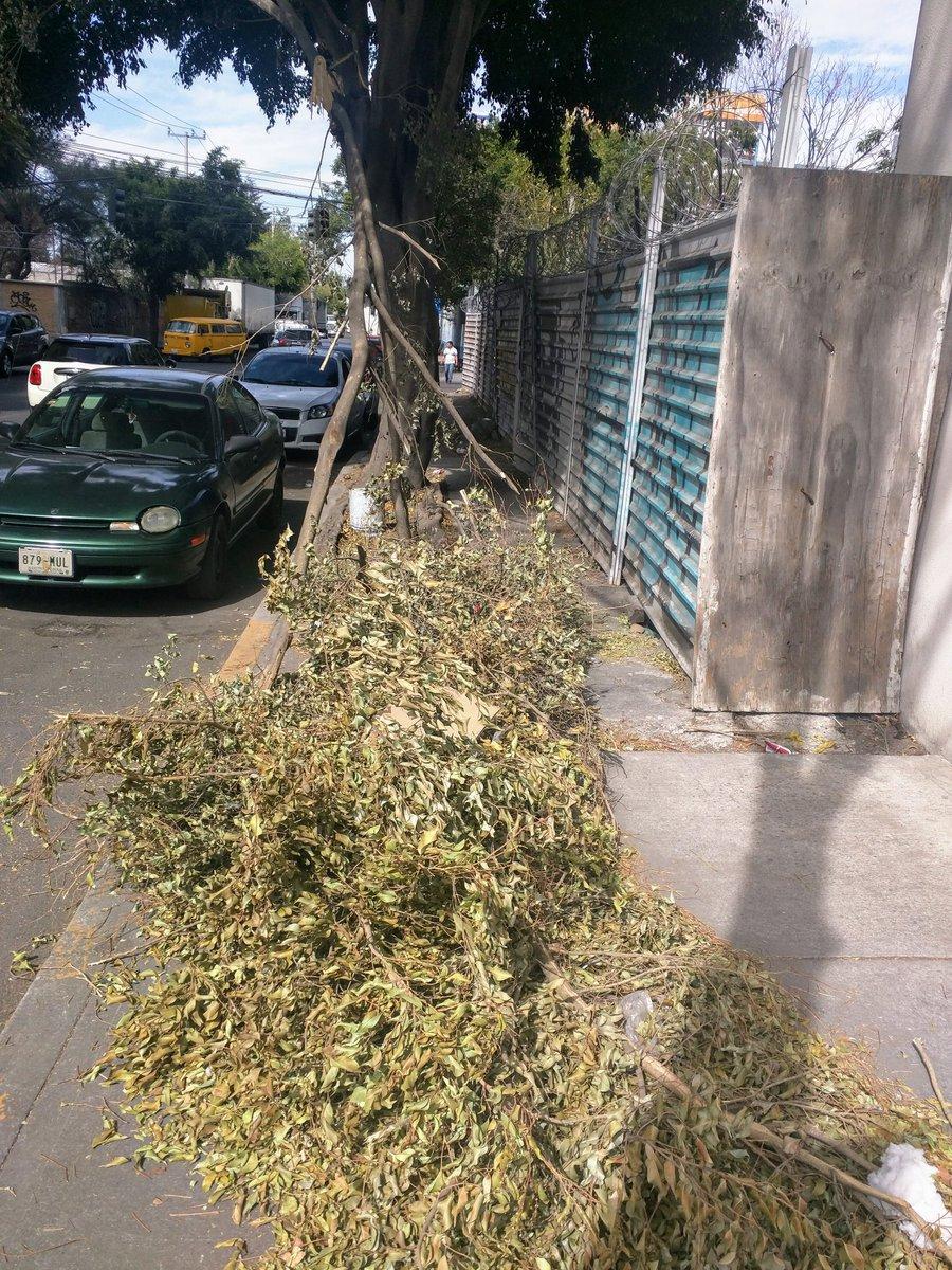 Van 2 semanas con las ramas rotas de este árbol ubicado casi esq Prol. Naranjo y Calle 4, Col. Del Gas, no se puede usar la banqueta y es paso constante sobre todo para quienes van a escuelas @AzcapotzalcoMx @GobCDMX @SEDEMA_CDMX @CNPC_MX