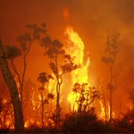Our Jan monthly update focuses on the ongoing bushfire crisis. The myriad of losses have been devastating and our sympathies go to all those affected by these events and deep thanks to everyone involved in response & recovery. https://t.co/T8KaOfVxwF