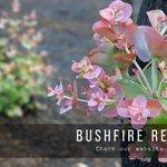 New resources page on our website collating bushfire information and updates. We'll add updates & resources to the page as they come to hand. If any NRMs or partner orgs know of any relevant info to add to this page, please DM https://t.co/YtPVQjKSIF