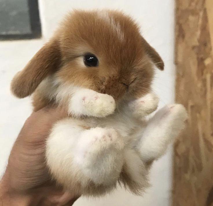 A smoll rabbit
