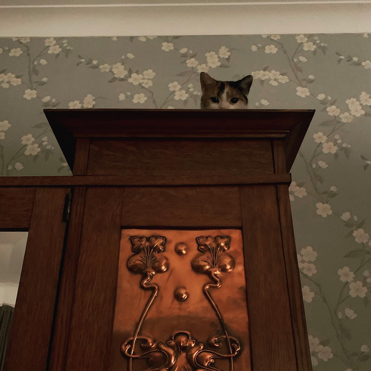Woke up. Switched on the light.  The cat is always watching.