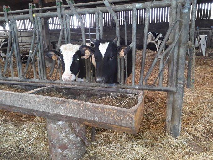 EDF pas de trêve hivernale pour les vaches  EPcopheXsAEl__y?format=jpg&name=small
