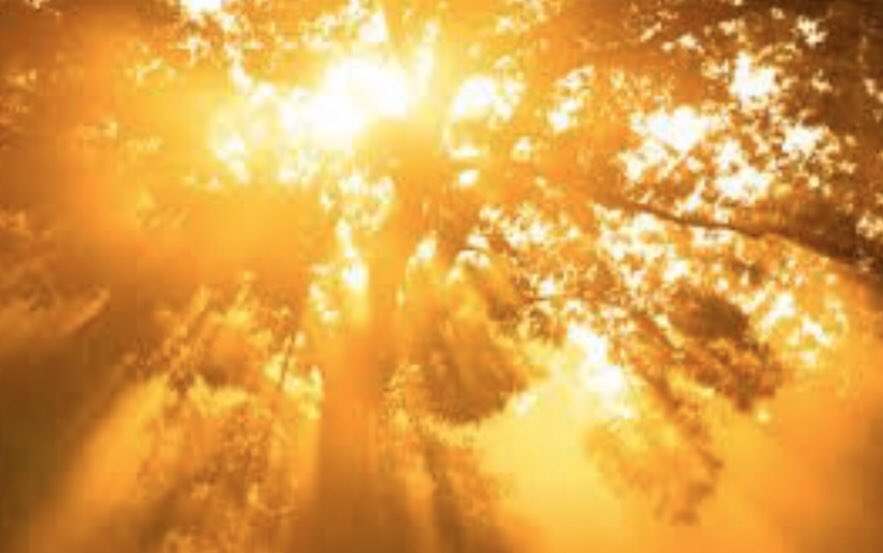 Bathe Breathe  The Golden light Trance Lucent Body and Mind  📷LizzChristed #celestialpoems #5D  #nature #micropoetry  #awakening