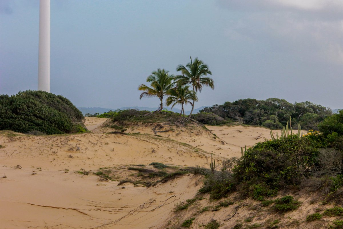 Mais fotos do novo Parque Estadual Marituba.  #sergipe #sosmataatlantica #parqueestadualmarituba #biodiversidadesergipana #barradoscoqueiros #biologo #flora #botanica #mataatlantica #biodiversidade #nature #aracaju #ufspic.twitter.com/ZpkmzGpnZV