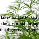 It takes longer for #CBD oil to be absorbed through the digestive system. It also takes longer to leave the body which prolongs CBD's healing effects. #hempoilextract #cbdoil #cannabidiols #cbdhelps https://t.co/YjFi8i3aPq