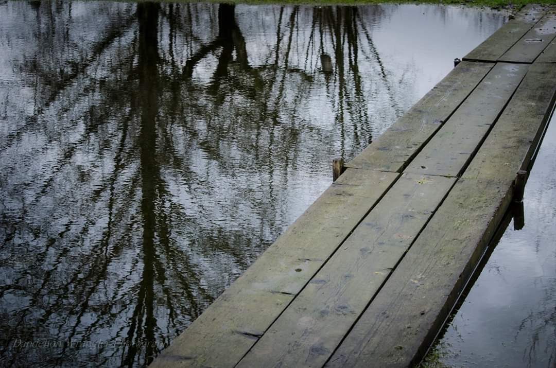 Having gardened here for years I've seen the resourcefulness of this gardens stewards. This bridge to nowhere allows transport of wood chips & manure to garden plots early in prespring. #photography #naturephotography #reflections #WalkingMyCommunity #GoForAWalk #Coquitlam #nikon