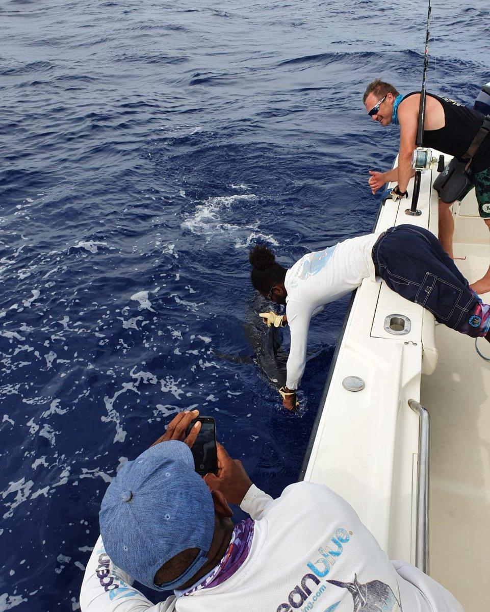 Havannah Harbour, Vanuatu - Azzura released a Blue Marlin.