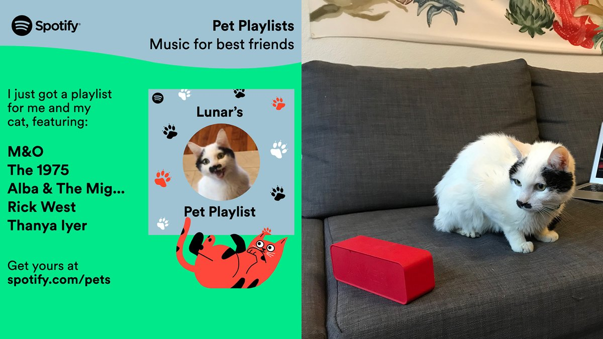 Here's what my cat thinks of Spotify's customized Pet Playlists